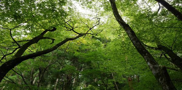 1、森林浴・集中力増進効果